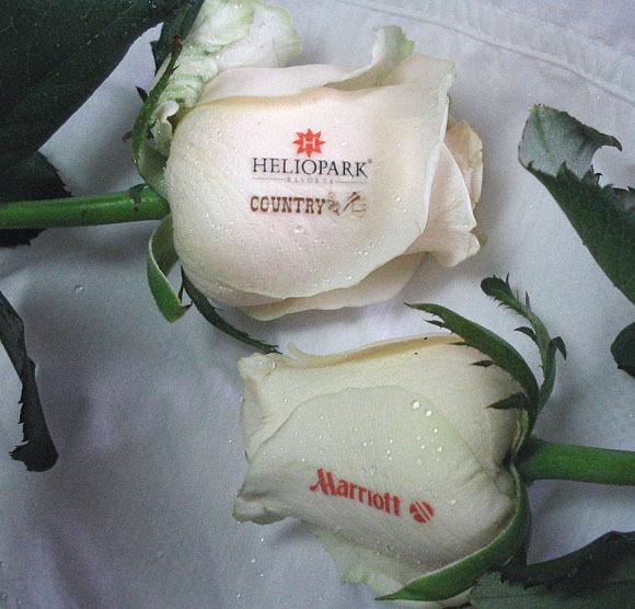 розы с поздравлениями на лепестках дают