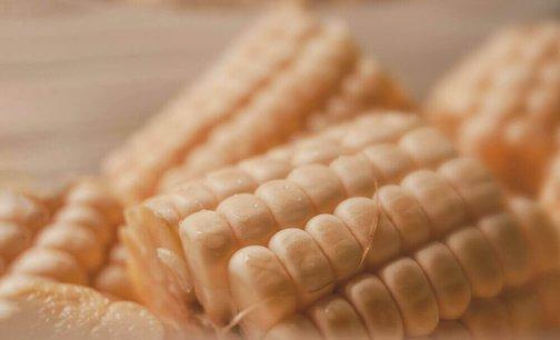 Ооо элеватор семена кукурузы сайт пластинчатых транспортеров