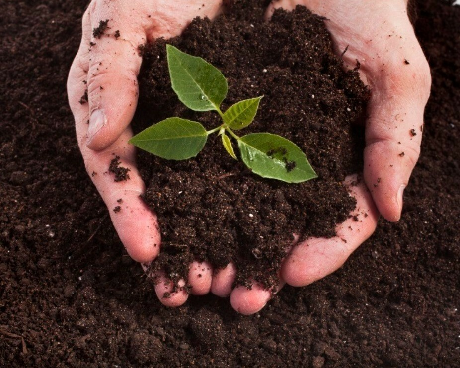 Водоудерживающая способность почвы напрямую зависит от ее типа