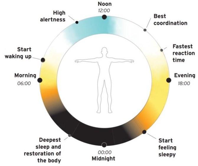 Влияние источников света на организм человека