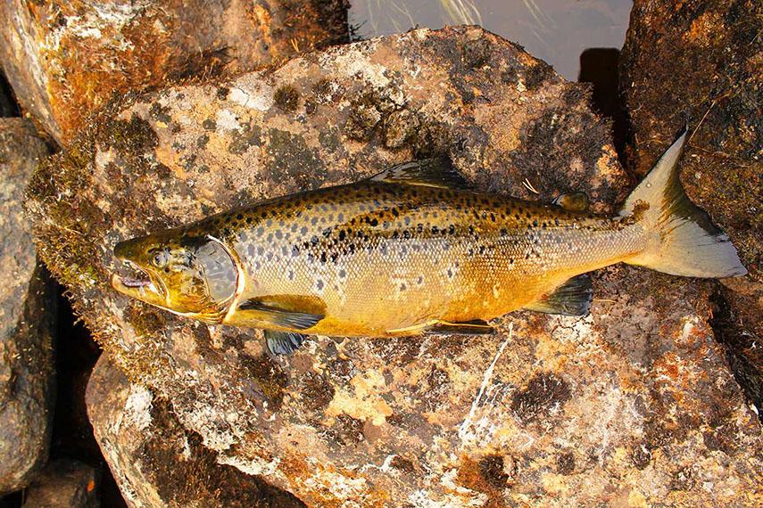 было предположить, фото рыб кольского полуострова фото под