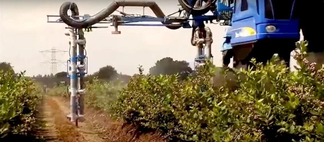 Обработка кустарника на плантациях