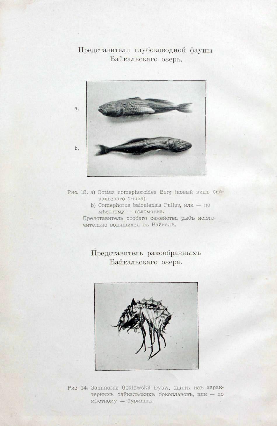 А.С. Боткин «Материалы для изучения озера Байкал»