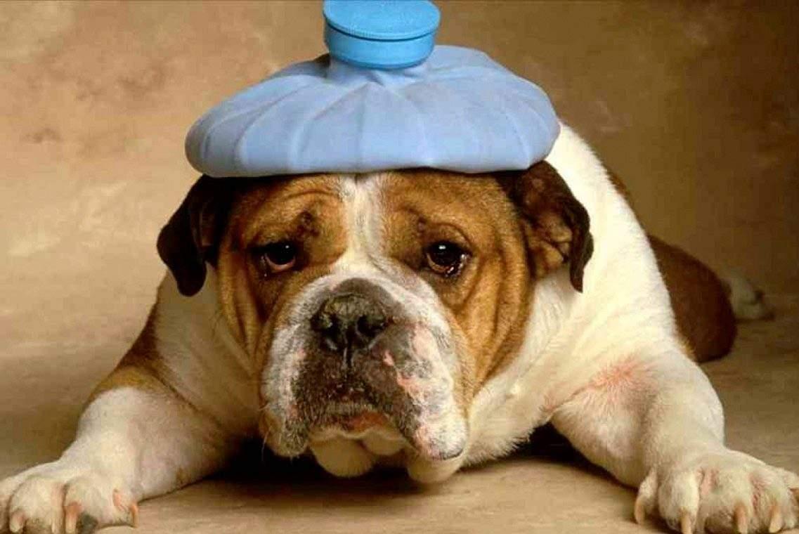 Веселые картинки про больную голову, днем рождения