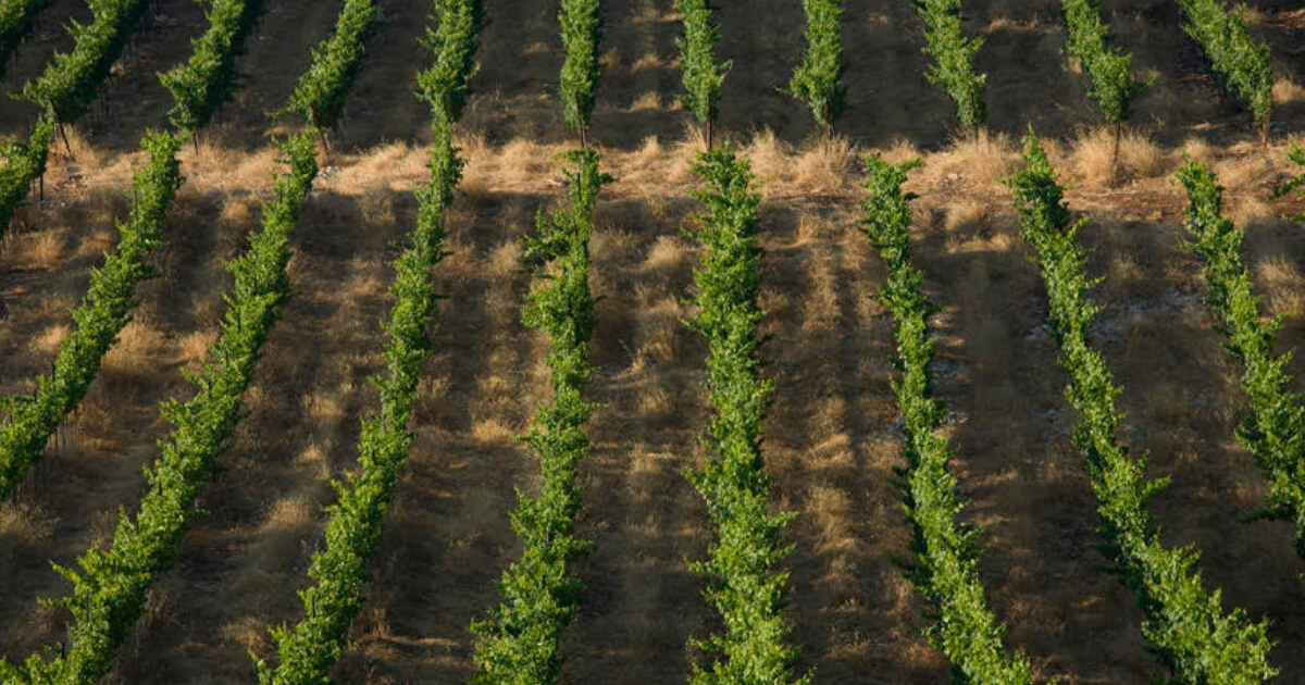 Купить кошерное вино Тура Вайнери (Tura Winery)