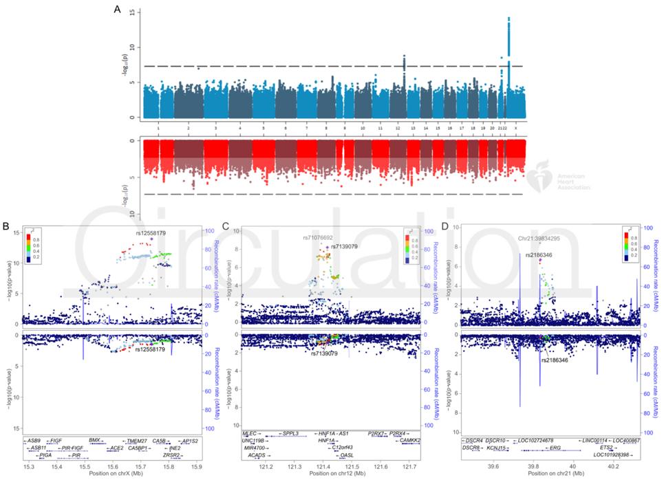 Рисунок. Ассоциации генетических полиморфизмов с плазменной концентрацией АПФ2
