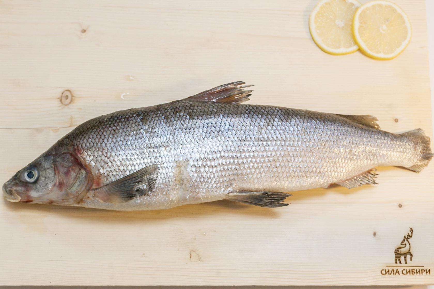 можно резать, муксун рыба фото описание салатом черного риса