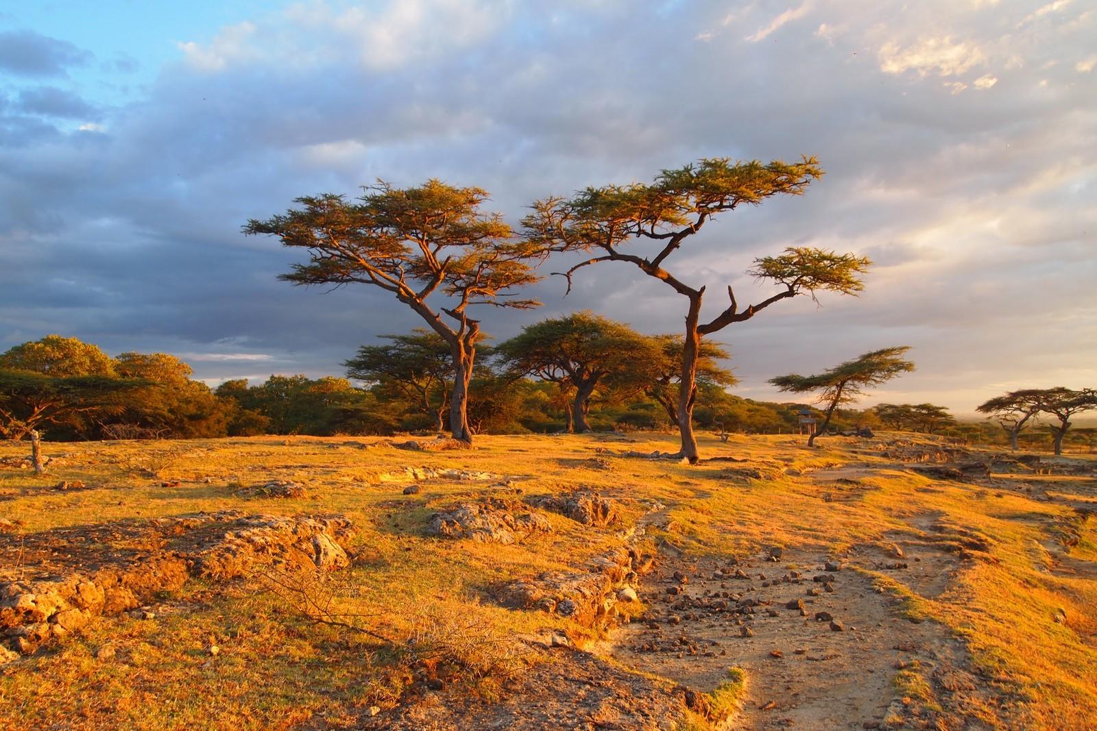 областной фото природа и пейзажи африки другой ватный