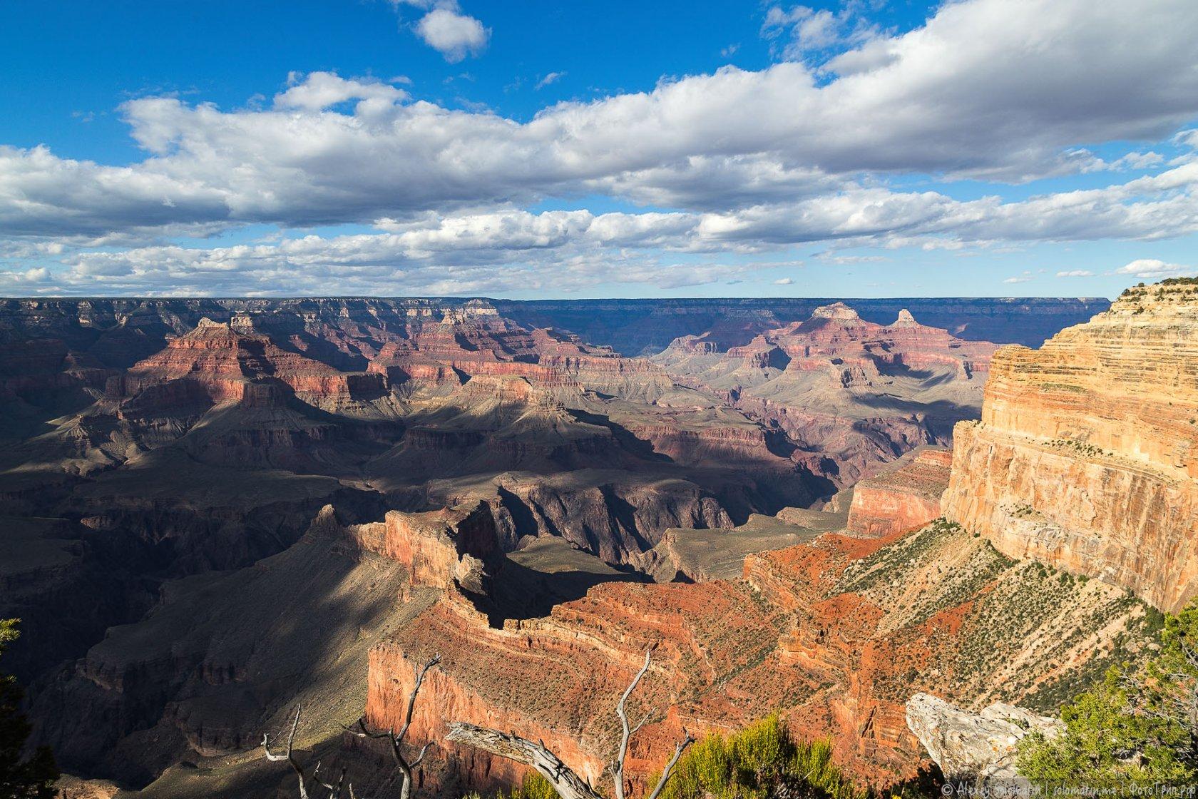 большой каньон сша фото лакиеру, лев является