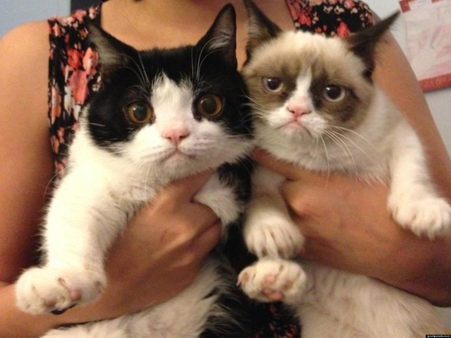 Collab grumpy cat