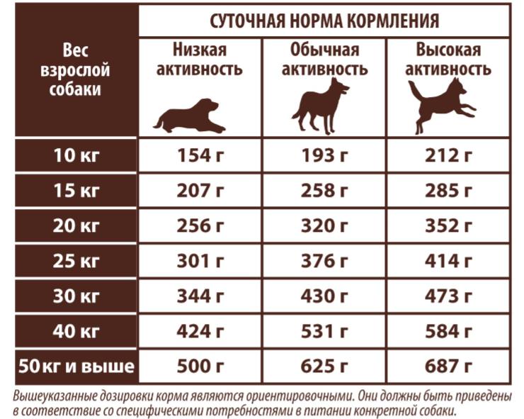 Режим питания собаки