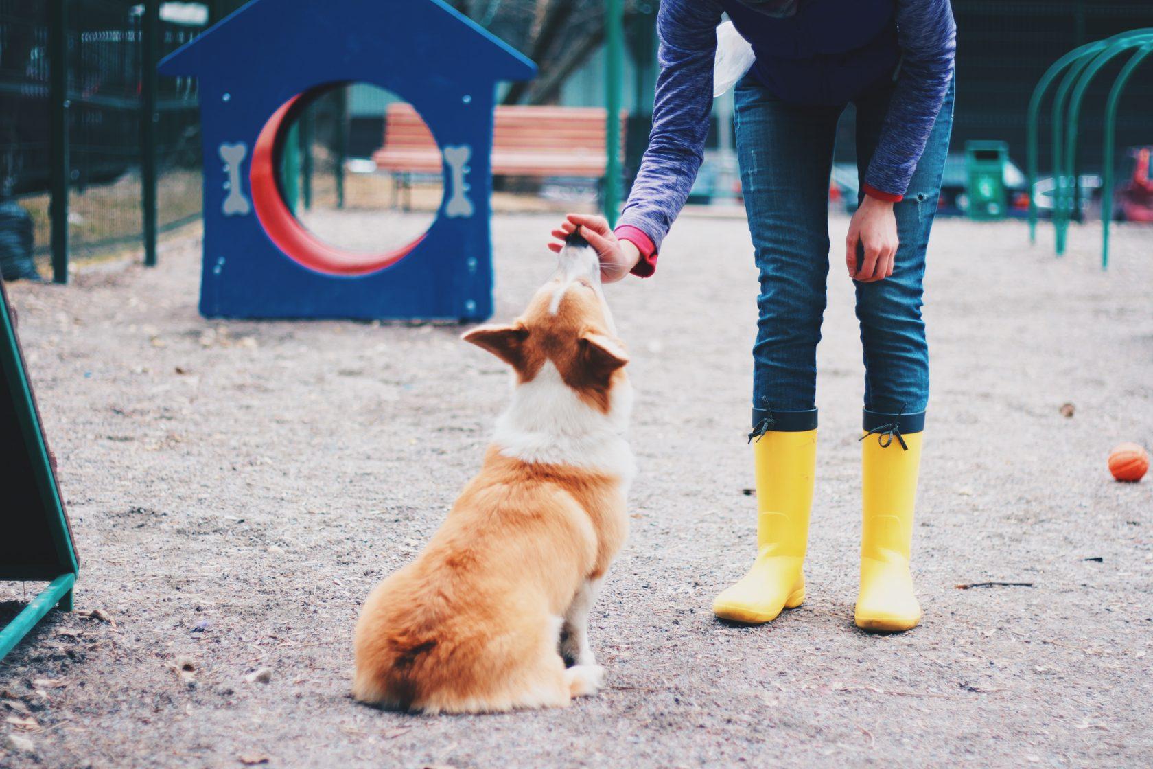советы по дрессировки маленьких собак