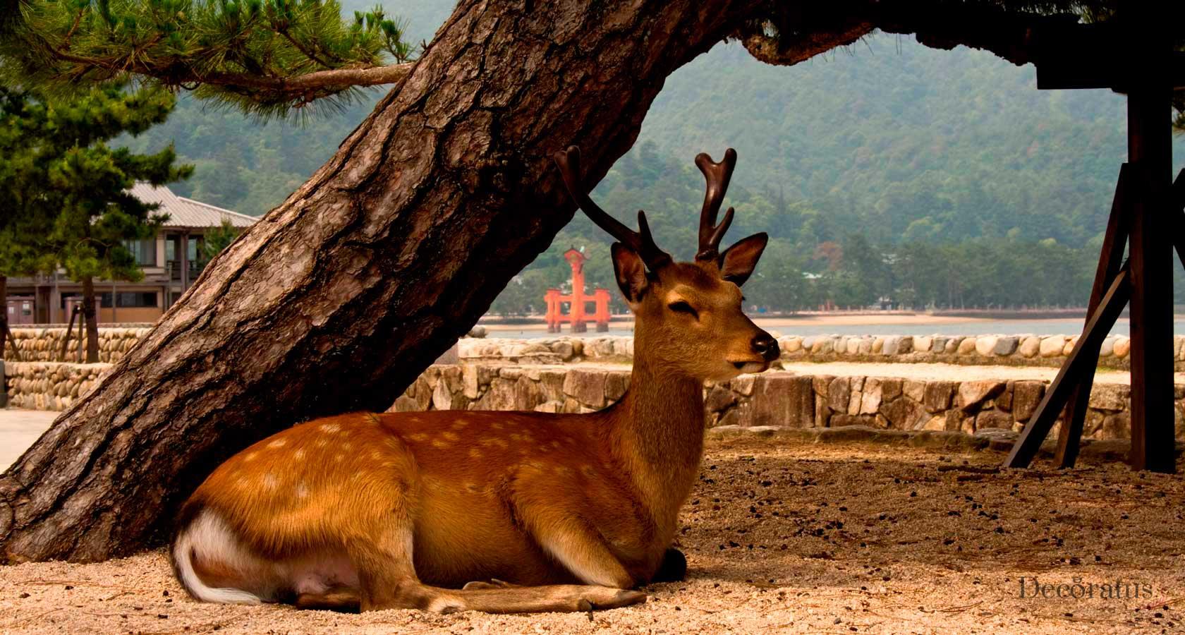 олени в святилище миядзима ицукусима в японии