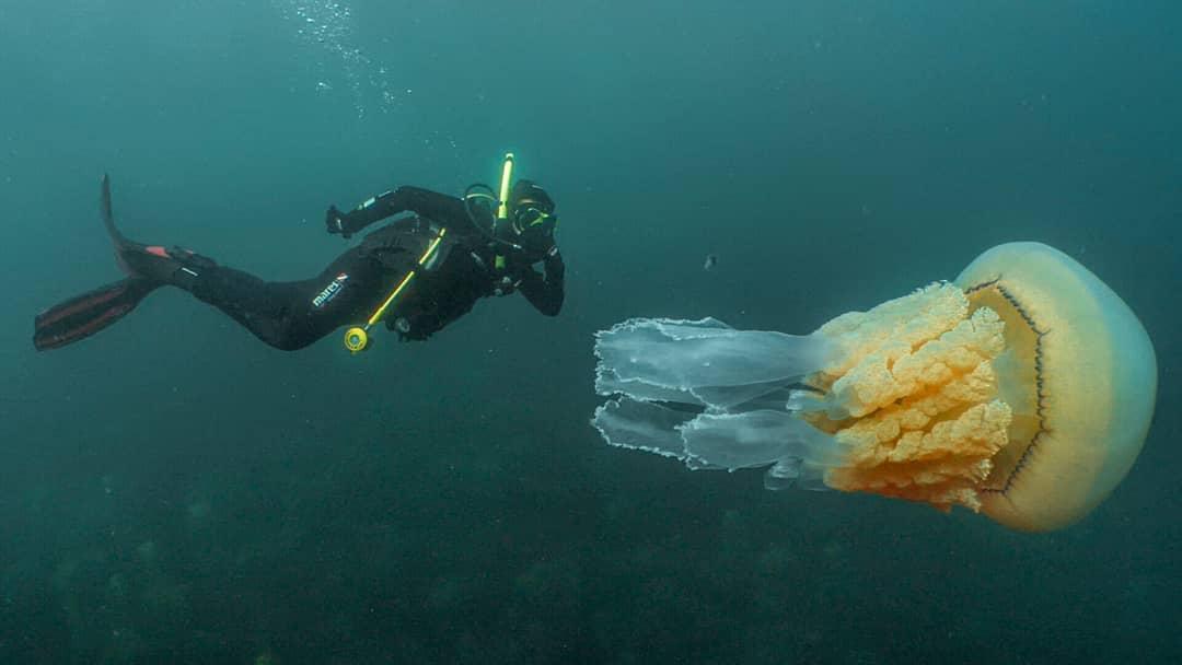 смешные картинки про медуз и водолазов полянка, позитивные-ребята инструкторы
