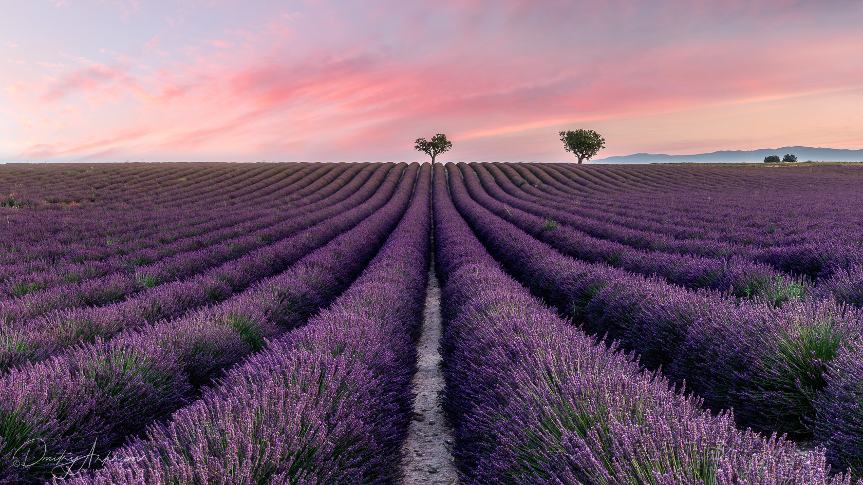 Sunset shooting at Provence lavender fields