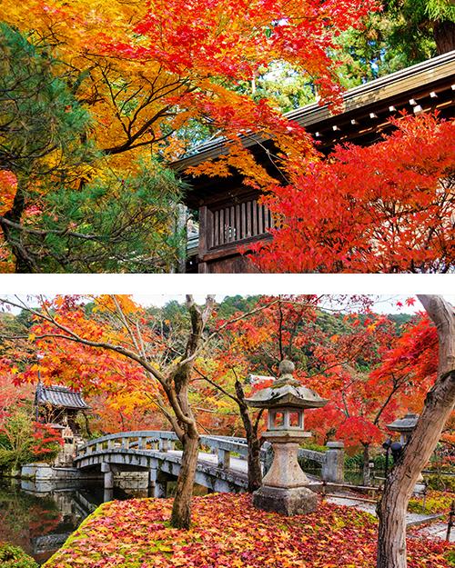 Японский каменный мост на фоне цветущих кленов