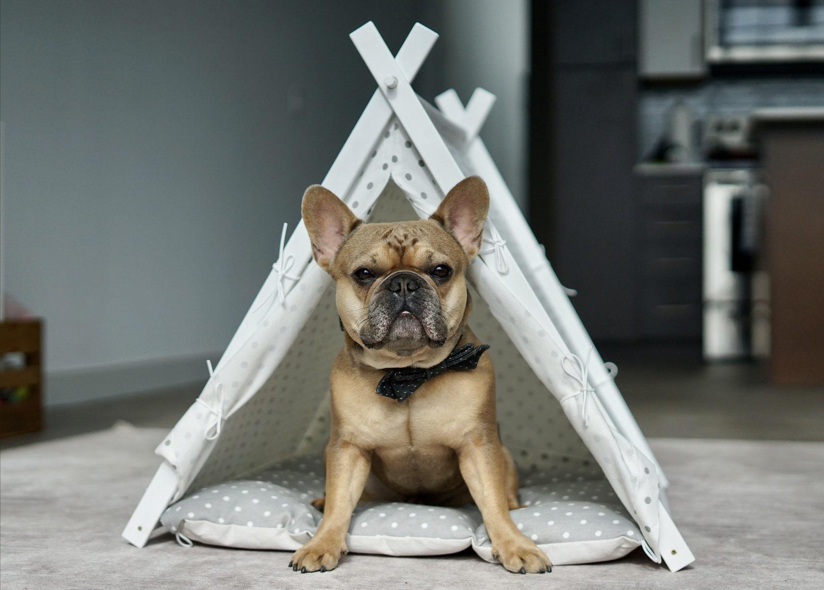 French Bulldog enjoying the Tee Pee lifestyle. Creative pet beds by DogAndTeepee.