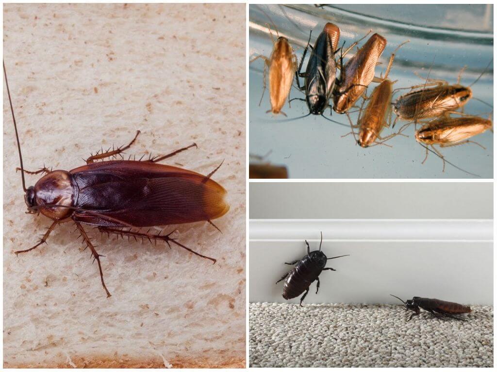 Наступление тараканов