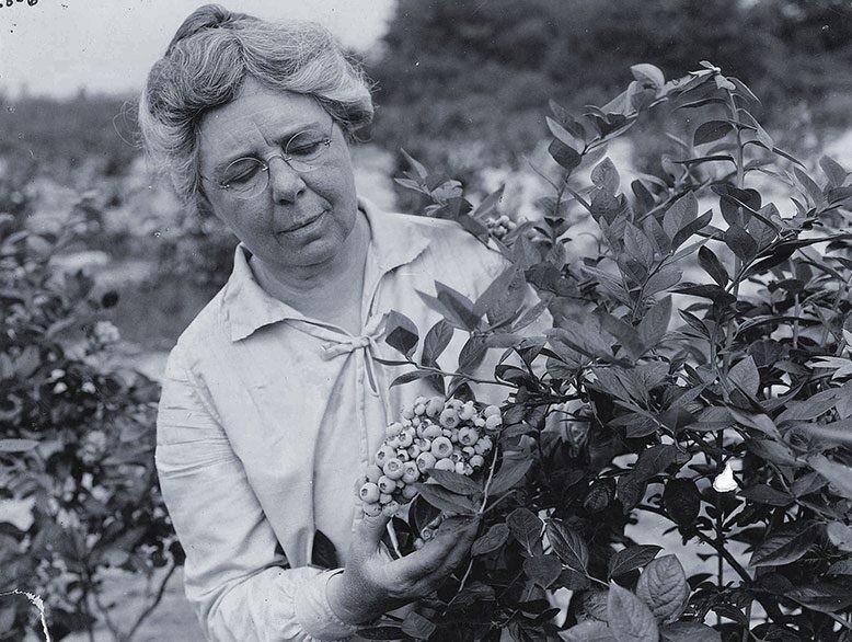 Элизабет Уайт всю свою жизнь посвятила выращиванию голубики