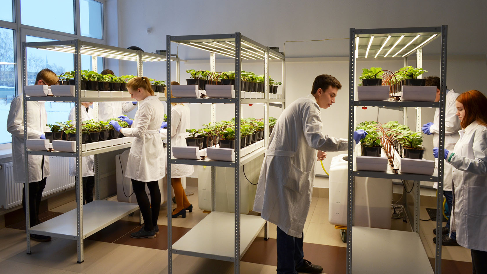 "NEW Strawberry vertical farm at the premises of the laboratory school ""Perspectiva"", 40 sq.m., Tomsk, Russia"