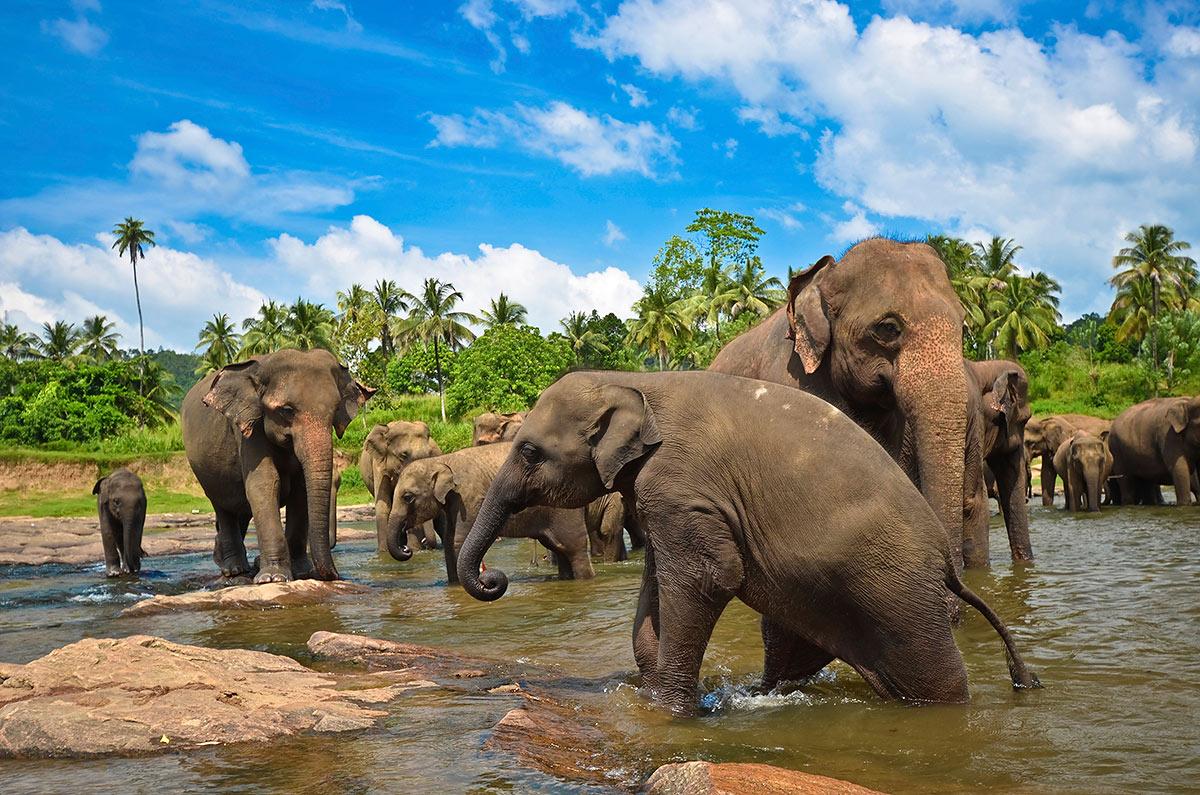 Купание слонов. Слоновий питомник.