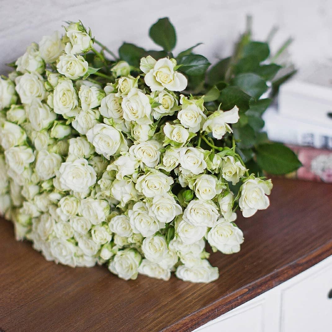 забавно, кустовые белые цветы фото открыл несколько